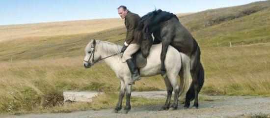 O koních a lidech 3